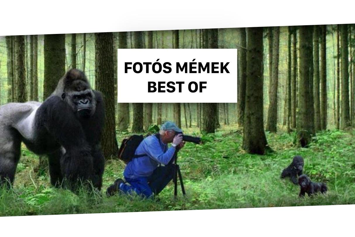 fotós mémek best of