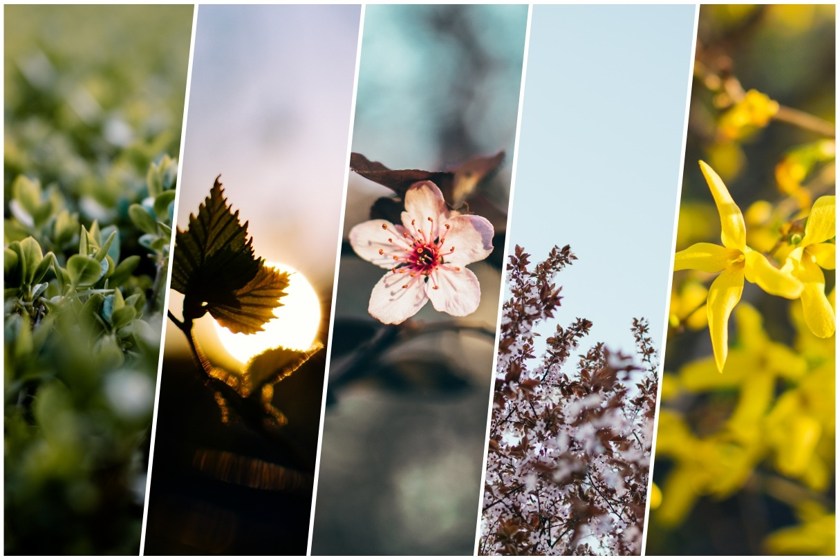 spring is here preset pack