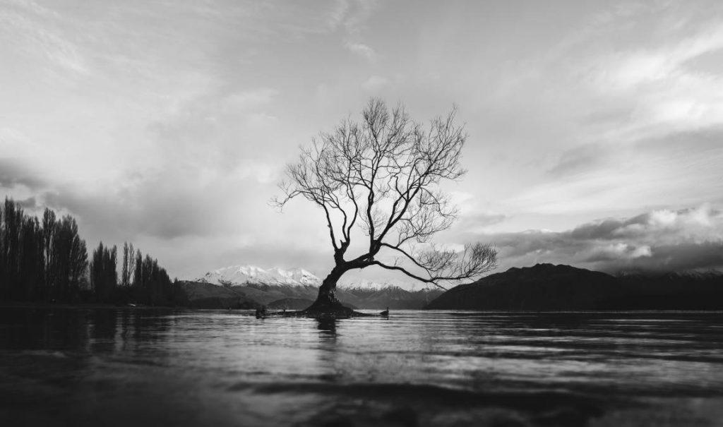halloweeni fotós ötlet pl. kopár tájak, magányos fa, tájkép