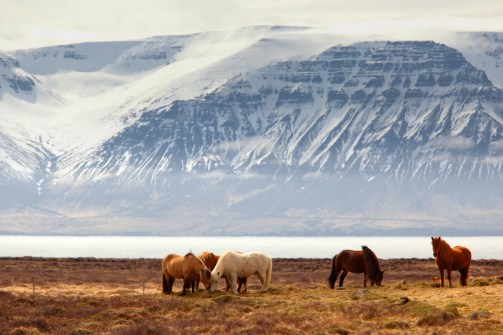 Vladimir Riabinin fotója Izlandról.