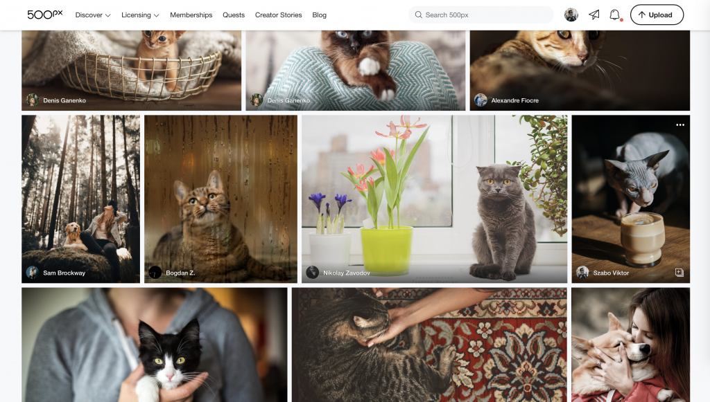 500px Loving Pets Licensing Quest: Shortlist